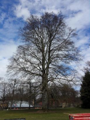 Wunderschöner alter Baum im Park
