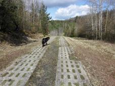 Kolonnenweg an der ehemaligen Deutsch-Deutschen Grenze