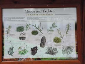 Moose und Flechten am Hermannsfelsen