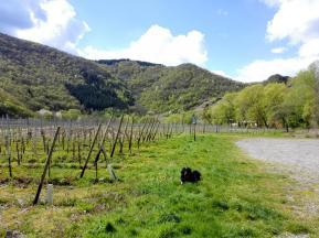 Direkt neben unserem Stellplatz beginnen die Weinstöcke