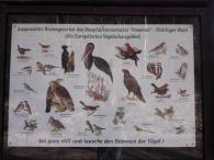 Vögel im Biosphärenreservat