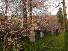 Alter Friedhof in der Nähe des Doms
