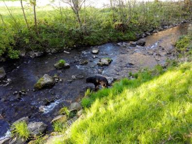 Doxi testet die Wasserqualität im Mühlenbach