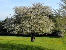 Bienchen kommt, damit ich im Herbst reiche Früchte trage