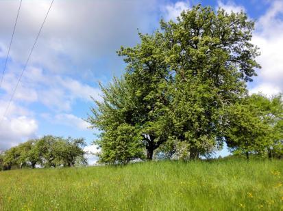 Obstbäume unter blauem Himmel
