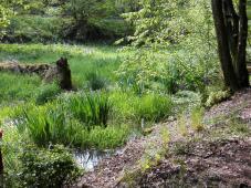 Ein natürliches Feuchtbiotop am Wegesrand