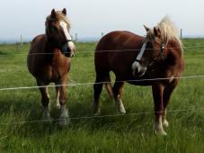 Pferde an einem Bauernhof in der Nähe des Kap Arkona