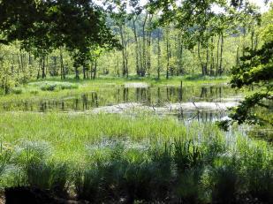 """Mitten im Buchenwald des Nationalparks Jasmund: Lurchi""""s Paradise"""