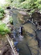 Doxi prüft die Wasserqualität der Langballigau
