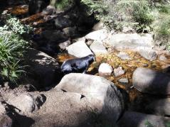 Das Wasser im Bach ist eisenrot