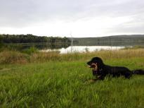 Doxi liebt es, im feuchten Gras zu liegen