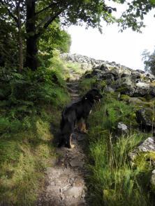 Doxi auf dem Wanderweg am Rande des Basaltfeldes