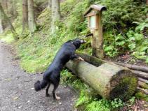 Doxi hat Durst