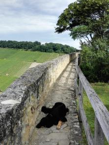 Doxi auf dem Wehrgang der erhaltenen Burgmauer
