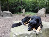 Steinkreis der Tugenden auf dem Waldlehrpfad - und Doxi mittendrin