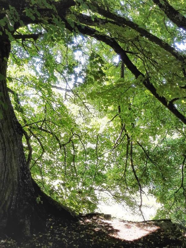 Wanderung durch den Ludwigswald