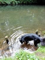 Doxi testet die Wasserqualität in einem der Fließe