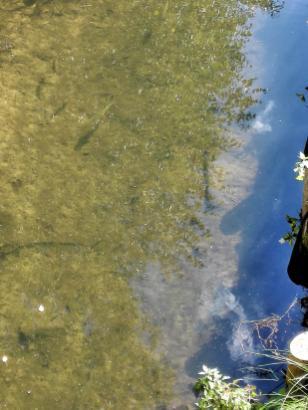 Dank der hervorragenden Wasserqualität verfügen die Fließe über einen reichen Fischbestand