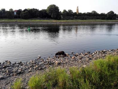 Doxi prüft die Wasserqualität der Elbe