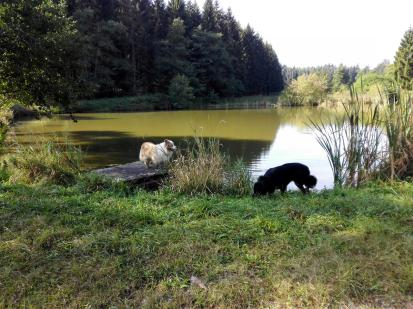 Doxi nimmt eine Wasserprobe aus dem Teich, Jimi schaut zu