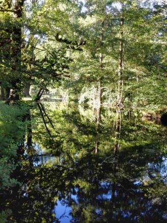 Im stillen Wasser spiegeln sich die Bäume