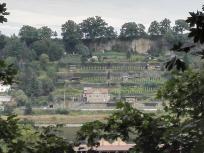 Blick auf einen Weinberg am gegenüberliegenden Elbufer