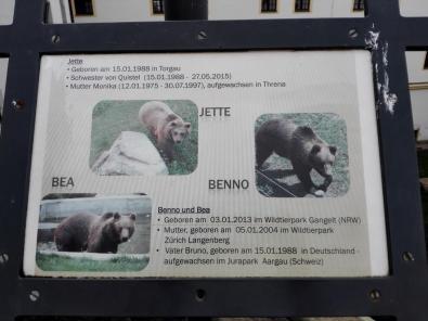 Infotafel zu den aktuell hier lebenden Bären
