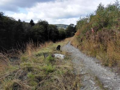 Am Ninglinspo in den Ardennen