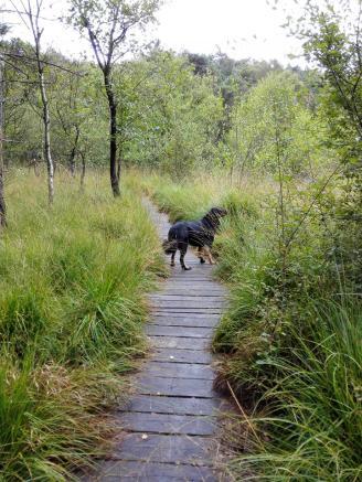 In den Niederungen ist die Landschaft sehr feucht, Stege sichern die Überwege