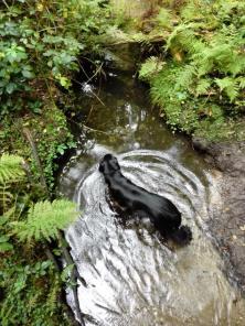 Doxi prüft die Wasserqualität im Schaagbach