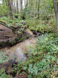 Mäandernd durchzieht der Schaagbach den Wald