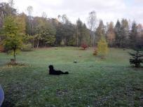 Doxi im Baumkreis