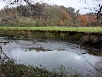Bis zu 1,5 Meter hat sich der Fluss in die Wiesenlandschaft eingegraben