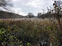 Feuchtgebiet rund um einen der zahlreichen Teiche im Tal