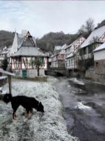 Doxi am Ufer des Elzbaches