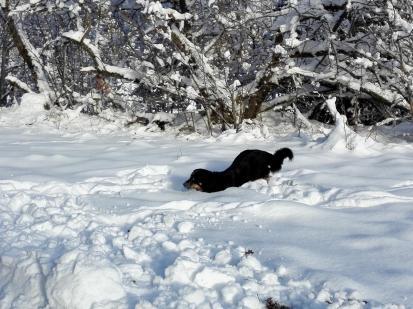 An der Oleftalsperre im Schnee