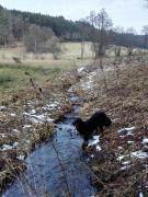 Doxi labt sich an einem Zulauf zum Nitzbach