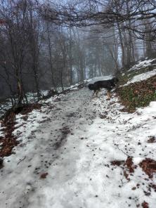 Durch mehrmaliges Auftauen und Wiedergefrieren haben sich die verschneiten Wege in Eisrutschbahnen verwandelt