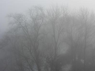 Nicht einmal die Gipfel der Bäume in unmittelbarer Turmnähe kann man richtig erkennen
