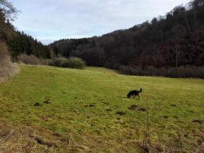 Doxi im Kuttenbachtal