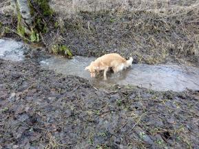 Bellis prüft die Wasserqualität des Kuttenbaches