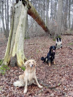 Bellis, Doxi und Bentley nahe der Ruine Stolzenburg