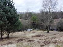 In der Teverener Heide