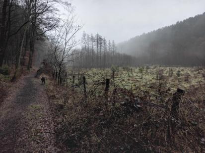 Regen und Dunst im Grenzbachtal