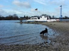 An der Rheinfähre Zons