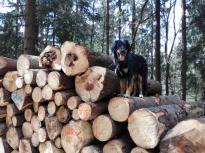 """Ich habe nur mal kurz """"Hopp"""" gesagt, schon ist Doxi rauf auf den Baumstapel"""