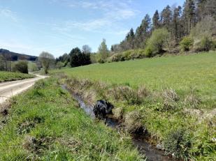 Doxi testet die Wasserqualität an einem Wildbach