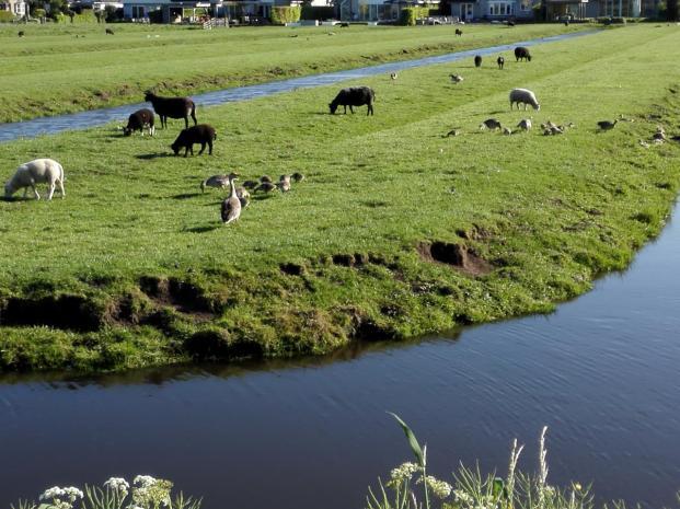 Die Gegend ist die Heimat vieler Wasservögel und die haben gerade unzähligen Nachwuchs