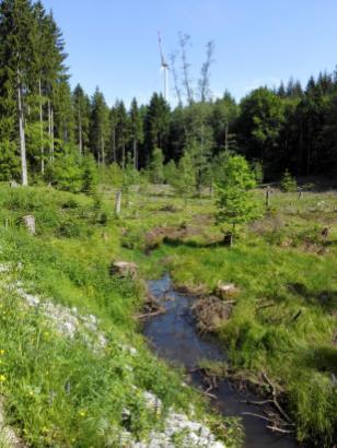 Bäche begleiten unseren Weg durch den Wald