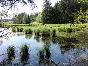 Feuchtwiesen im Rotbachtal